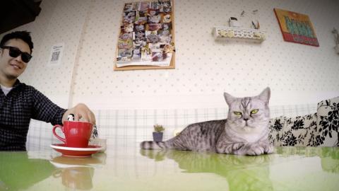 Место, где коты живут по-царски