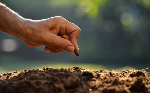 Что и когда сеять в огороде …