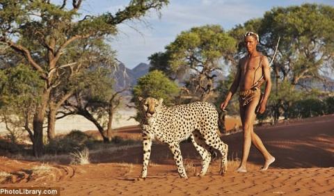 Прогулка с гепардами