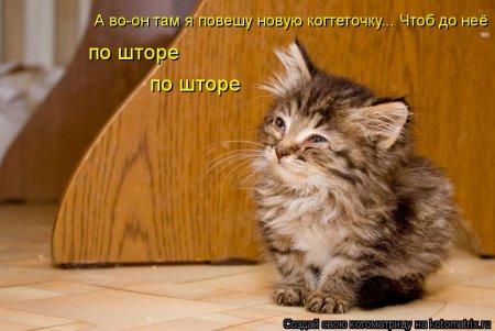Котомашка, всякое разное зверьё отжигает...