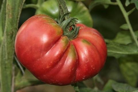 Как выращивать вкусные и цел…