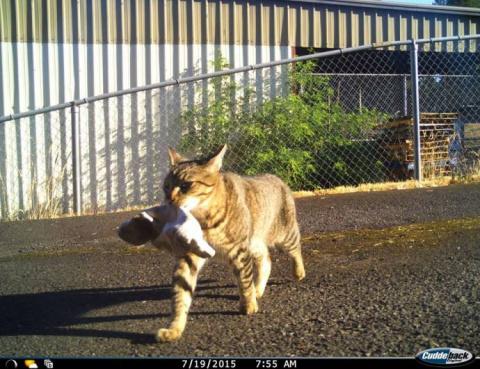 Кот полицейского оказался воришкой