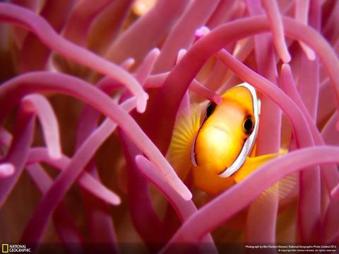 Странные и прекрасные существа, живущие на дне океана