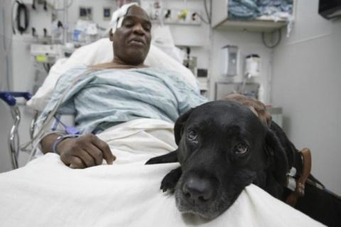 Трогательные истории животных, спасших жизнь людям