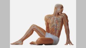 Как восстанавливается органи…