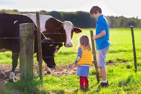 От астмы детей защитят коровы!
