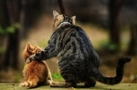27 «почему» о котах!)