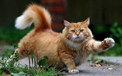 Смешное о кошках)))
