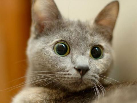 Если ваша кошка так делает - бейте тревогу!!!