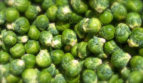 Если вы однажды вырастили брюссельскую капусту, то уже никогда не откажетесь от нее!
