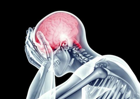 Нейропластика мозга: Как вы …