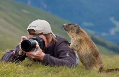 Забавный мир животных продолжение…