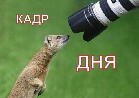 Кадр дня: Божья коровка,улети на небо!))