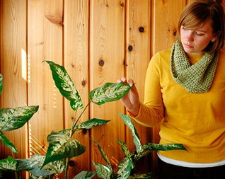 Комнатные растения – простые…