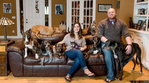 Они приютили 8 старых собак, которые обожают спать в кровати! И тогда мужчина сделал нечто гениальное
