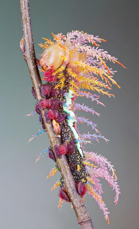 Самые невероятные гусеницы и то, что из них получается в результате