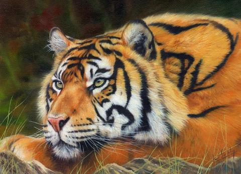 Английский художник Devid Stribbling. Дикие животные