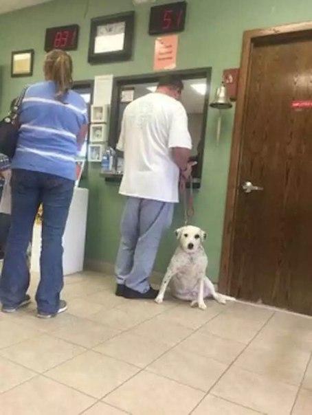 Хозяин привел свою собаку в …