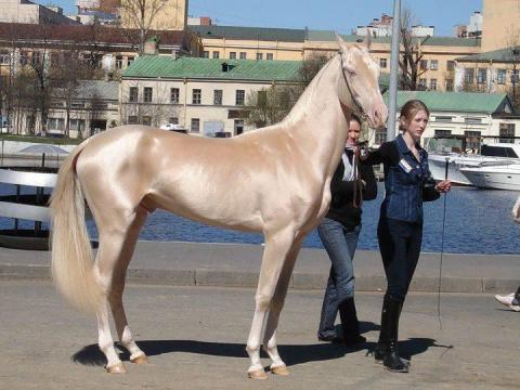 20 самых красивых лошадей в …