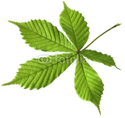 Шаблоны и картинки листьев разных деревьев