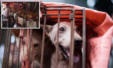 Едим, ели и будем есть: почему китайцы не желают отказаться от собачьего мяса?