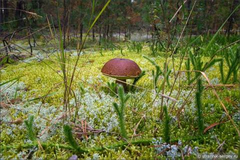 По грибы и ягоды в неведомый край красоты