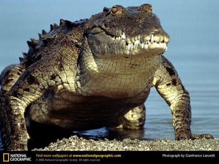 Вся правда о крокодилах / Th…