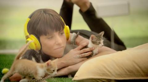 Котико-терапия против стрессов