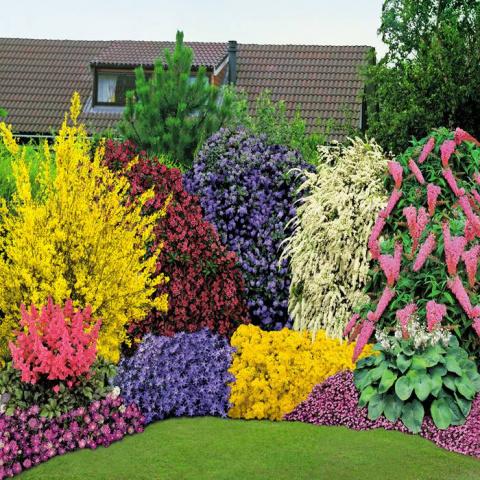 Миксбордер – нетривиальные идеи для вашего сада