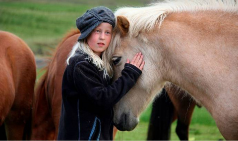Лошади способны понимать эмо…