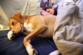 Image result for Правильно ли брать домашних любимцев спать в свою кровать