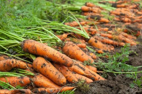 Как получить отменный урожай…