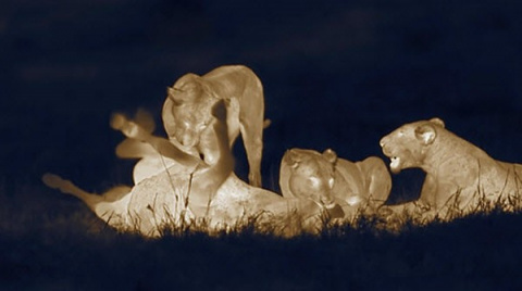 Ночная Африка от Мартина Дорна