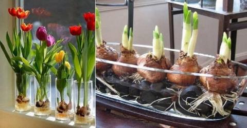 Цветущие тюльпаны круглый го…