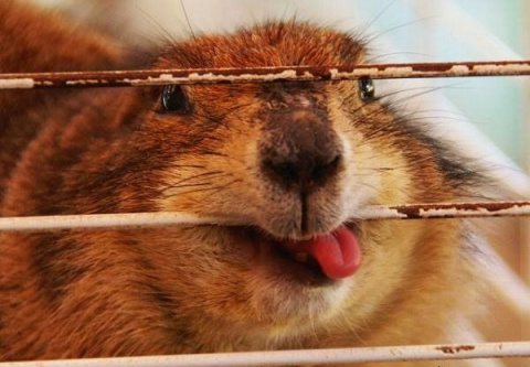 Подборка забавных животных
