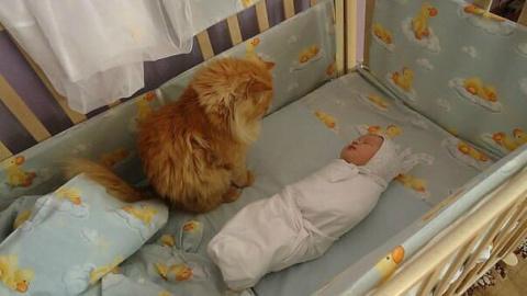 Мысли кота