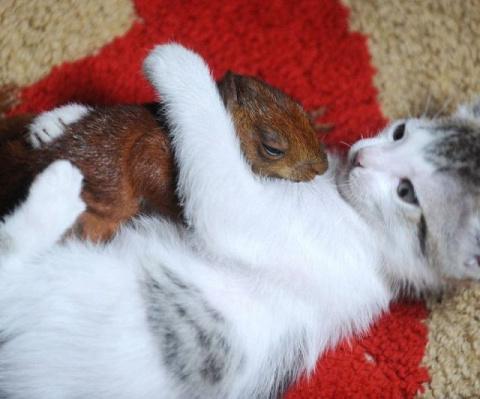 Кот и белочка - лучшие друзья (видео)