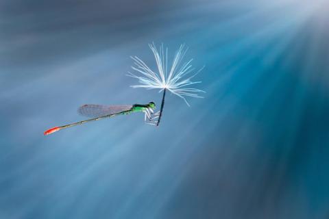 Фотопроект Nordin Seruyan: «Жизнь насекомых»