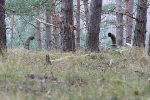Ребята блуждали по лесу и ув…