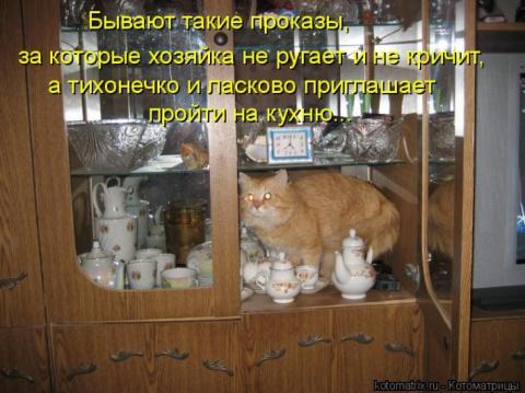 Вежливые кошки ( котоматрица)