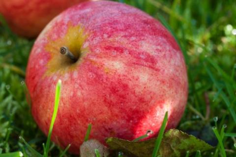 5 чудо-компонентов, которые заменят молодильное яблоко