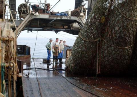 Эти рыбаки разгружали сети, …