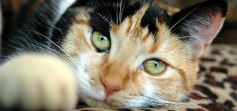 Ученые выяснили, откуда у кошек берутся пятна на шерсти