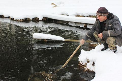 В Красноярском крае фермер разводит элитную рыбу в… ручье возле дома!