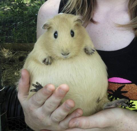 Милая подборка фотографий беременных животных