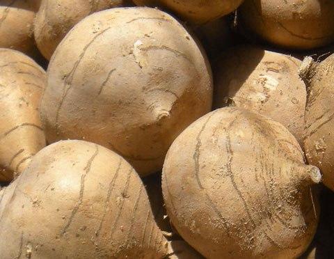 Фасоль-джикама, уникальная дама: сверху горошки, снизу картошки