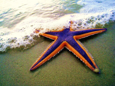 Морские обитатели, как произведения искусства природы! (Ну очень красиво!)