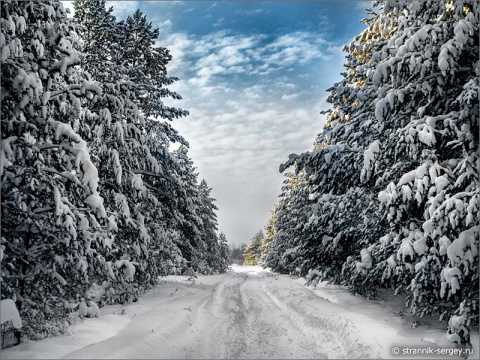 По красивой лыжне
