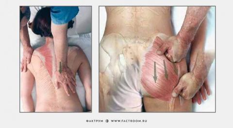 Как делать массаж: 7 картино…