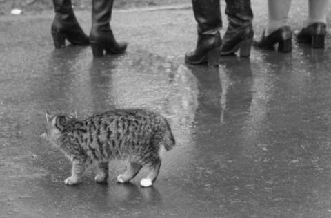 А это кот в руках от счастья плакал....